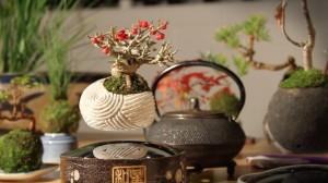 air-bonsai